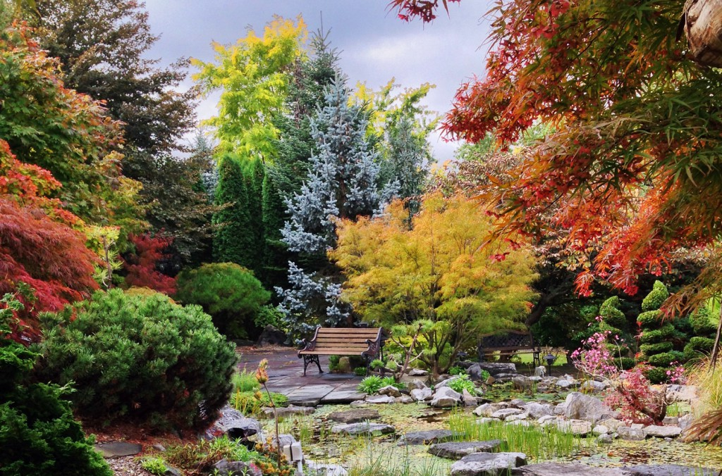 Japanese garden fall colors